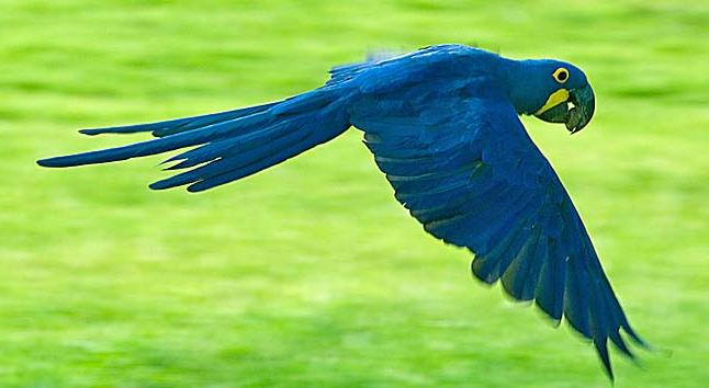 most expensive birds in the world