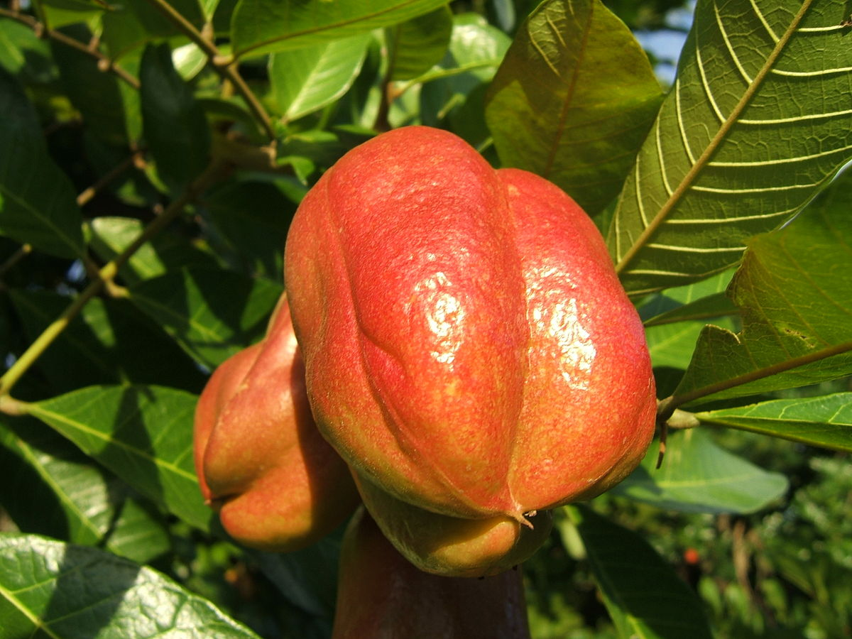 Rare Fruits In The World. Ackee Fruit
