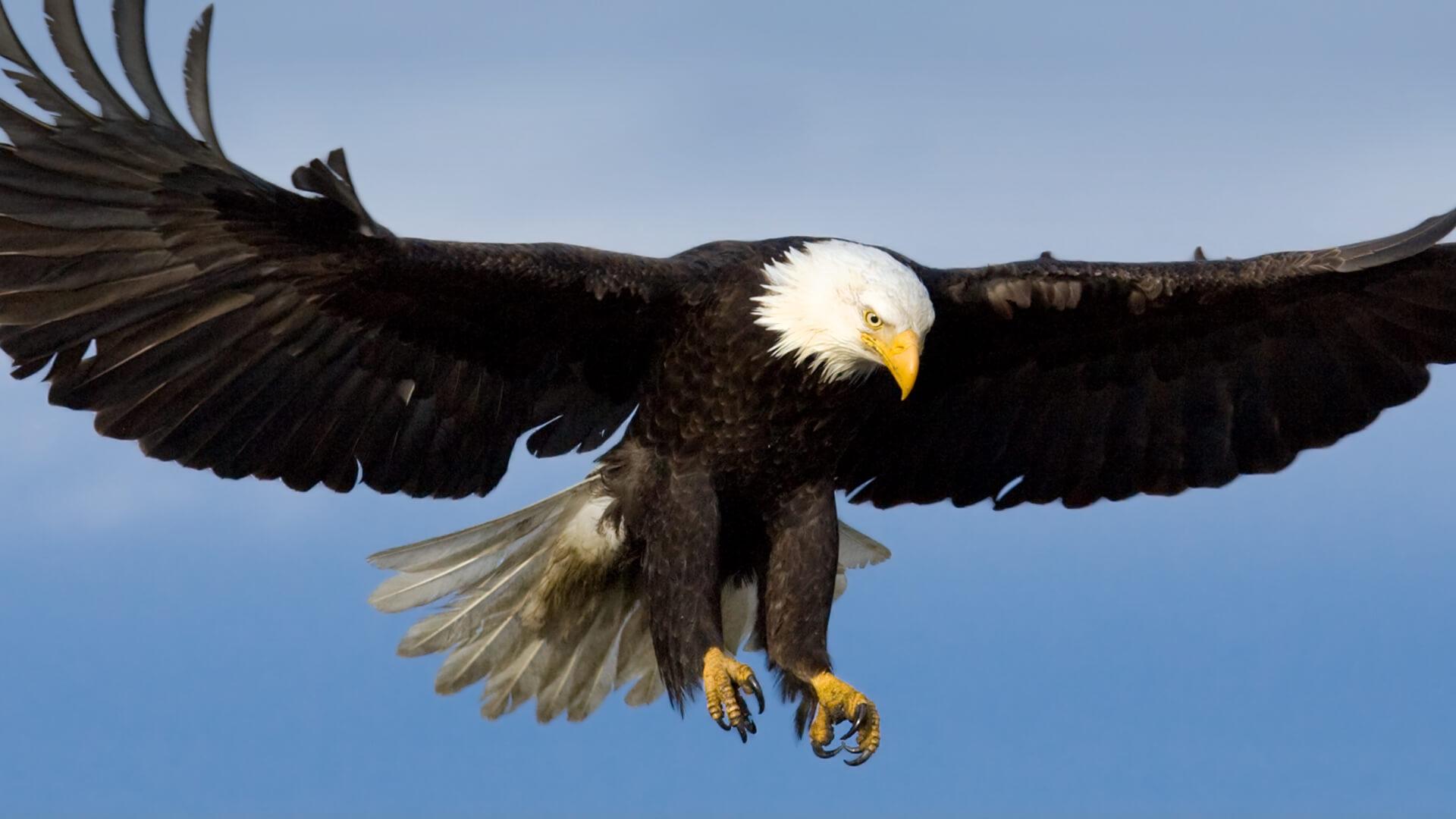 Amazing North America Animals