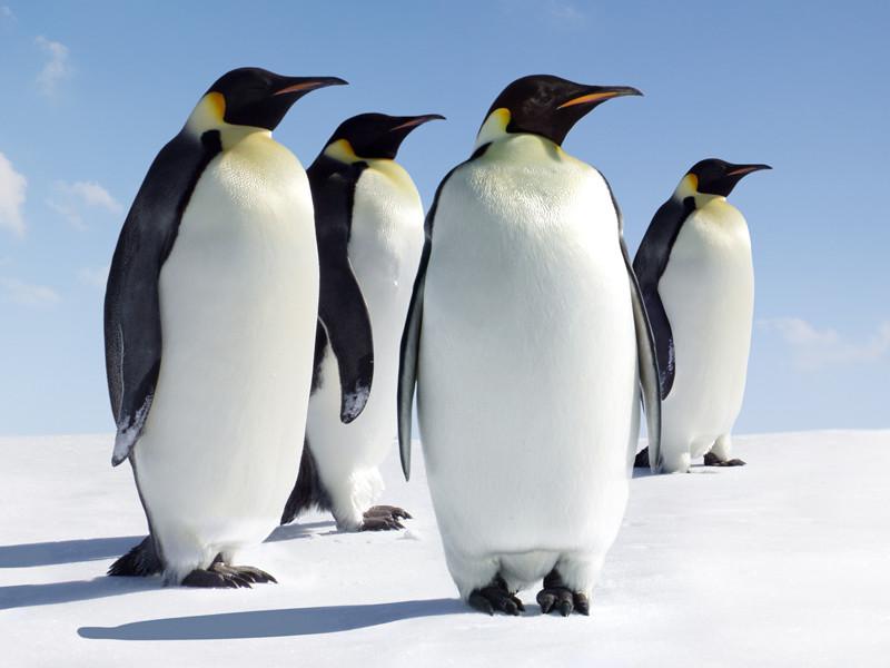 Amazing Antarctic Animals