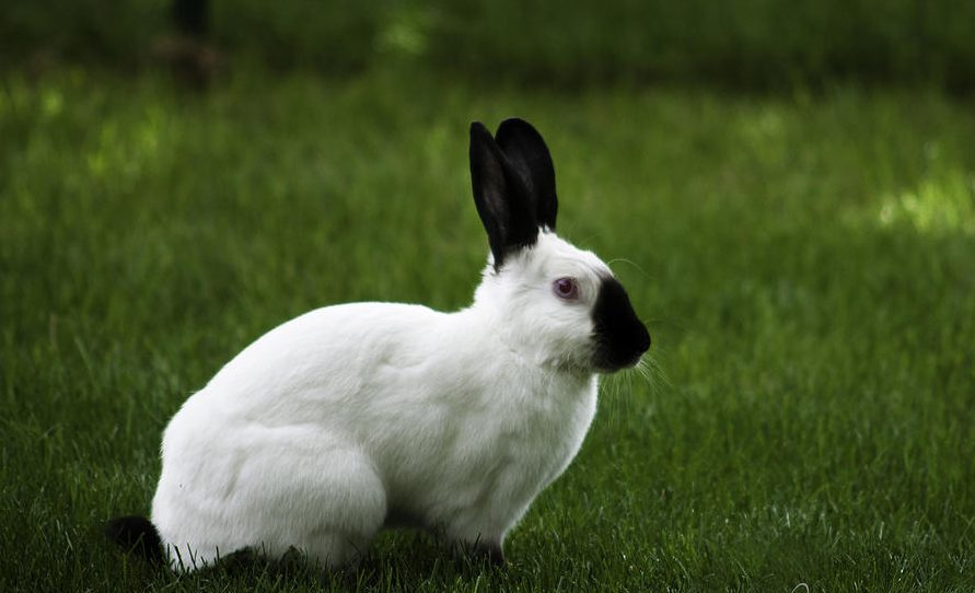 Photo of Top 7 Most Popular Rabbit Breeds In The World