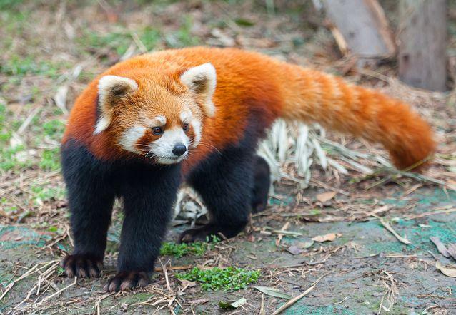Beautiful Endangered Animals