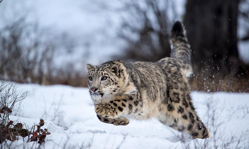 Amazing Himalayas Animals