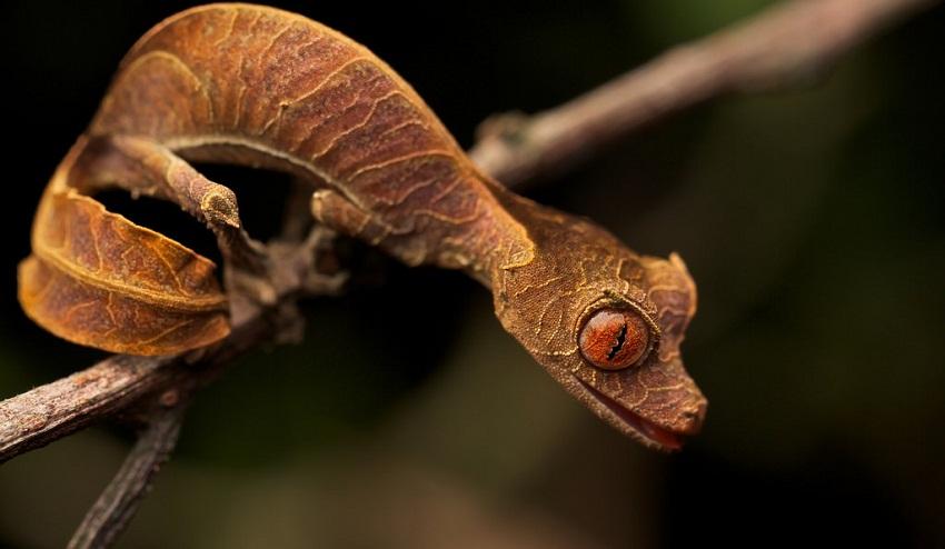 Amazing Madagascar Animals