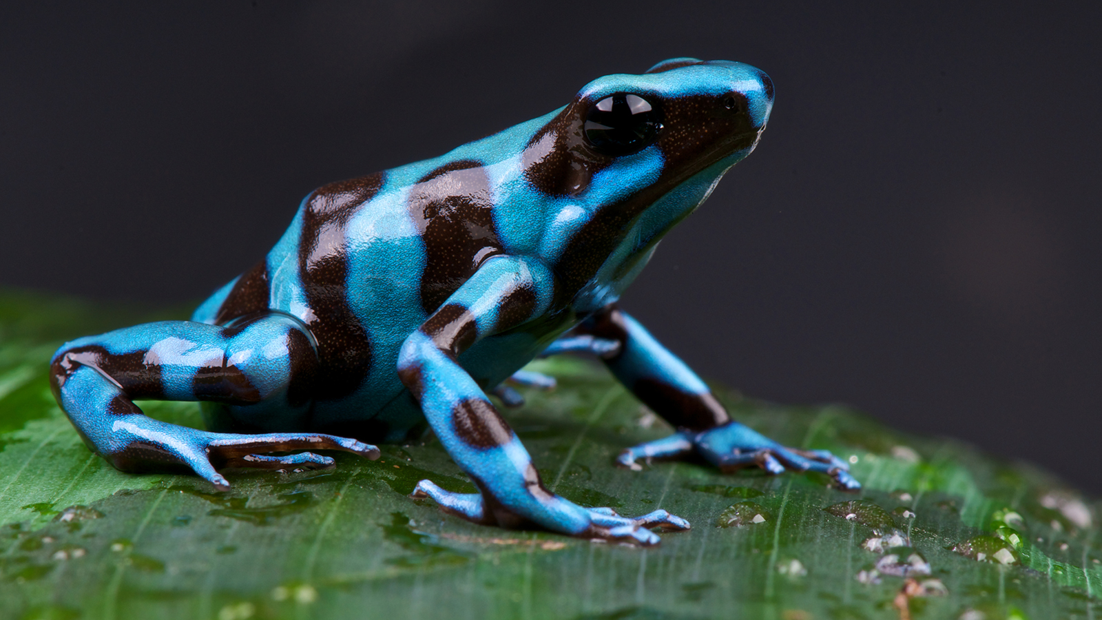 Photo of Top 10 Most Poisonous Frogs On Earth In The World