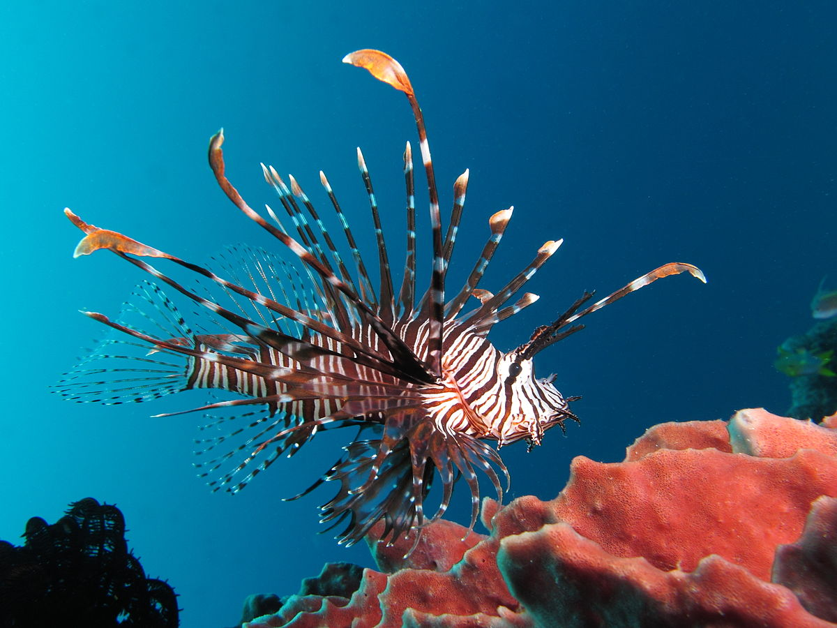Photo of Top 10 Most Dangerous Sea Creatures In The World