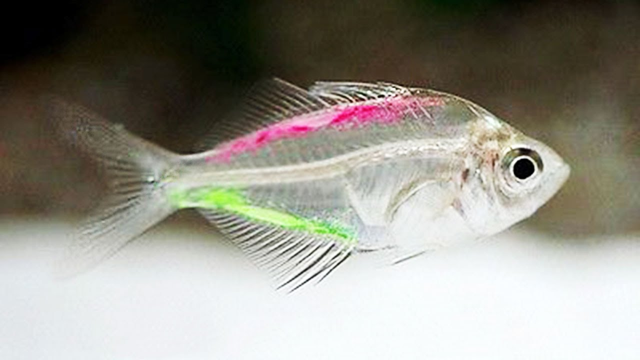 Photo of Top 10 Transparent Animals In The World