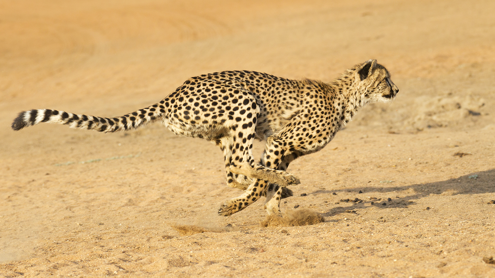 Photo of Top 10 Fastest Creatures In The World
