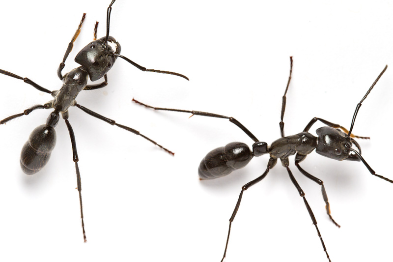 Photo of Top 10 Most Impressive Ants In The World