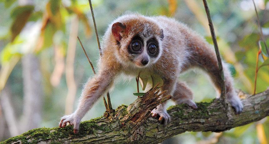 top 10 cutest baby animals