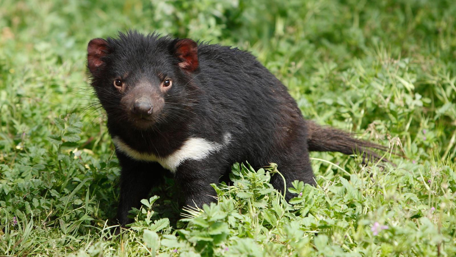 top 10 cutest animals 2017