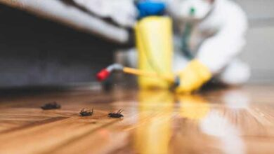 How To Keep Pests Away This Summer
