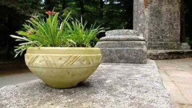Tips To Purchase Outdoor Stone Planters For Your Back Yard
